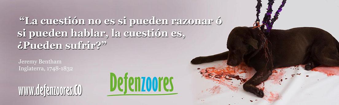 Defenzoores  | 2014 Promoviendo el Bienestar Animal en Colombia